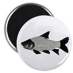 Giant carp barb Magnets