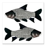 Giant carp barb Square Car Magnet 3