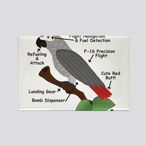 Anatomy of an African Grey Parrot s Magnets