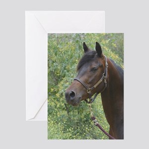 Card Bay Horse Head Shot Greeting Cards