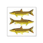 Golden Mahseer Sticker