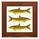 Golden Mahseer Framed Tile