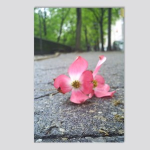 New York Flower Postcards (Package of 8)