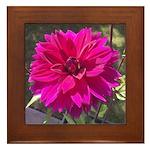 Magenta Begonia Framed Tile