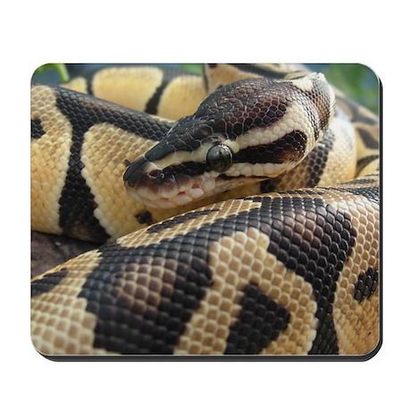 Ball Python Mouse Pad