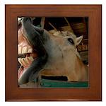 Humorous Equine Framed Tile