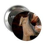 Humorous Equine 2.25