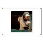 Humorous Equine Banner