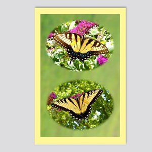 Eastern Tiger Swallowtails Female & Male Postcards