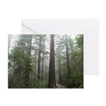 Redwood Forest Greeting Cards (Pk of 10)