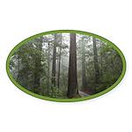 Redwood Forest Oval Sticker