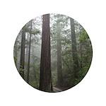 Redwood Forest 3.5