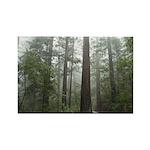 Redwood Forest Rectangle Magnet (100 pack)