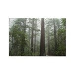 Redwood Forest Rectangle Magnet (10 pack)