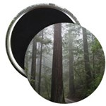 Redwood Forest Magnet