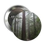 Redwood Forest 2.25