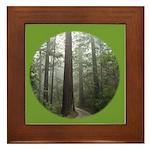Redwood Forest Framed Tile