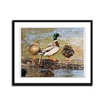 Mallard Ducks Framed Panel Print
