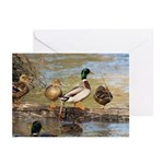 Mallard Ducks Greeting Cards (Pk of 10)