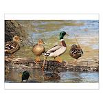Mallard Ducks Small Poster