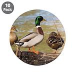 Mallard Ducks 3.5