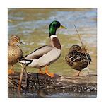 Mallard Ducks Tile Coaster