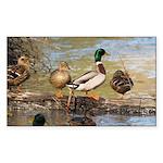 Mallard Ducks Sticker (Rectangle 10 pk)