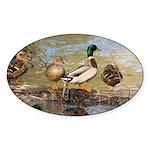 Mallard Ducks Sticker (Oval 10 pk)