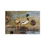 Mallard Ducks Rectangle Magnet (10 pack)