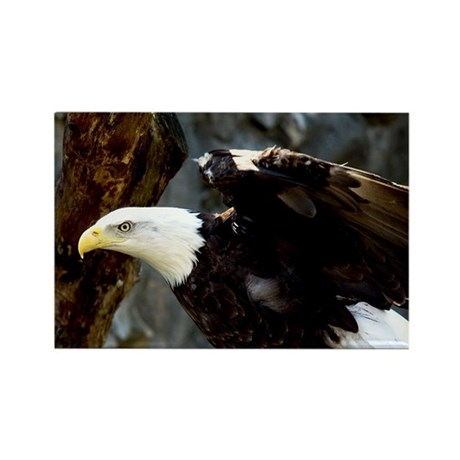 bald eagle pose rectangle magnetbuffaloworks