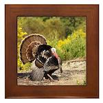 Wild Turkey Gobbler Framed Tile