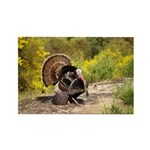 Wild Turkey Gobbler Rectangle Magnet (100 pack)