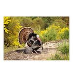 Wild Turkey Gobbler Postcards (Package of 8)