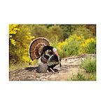 Wild Turkey Gobbler Mini Poster Print