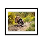 Wild Turkey Gobbler Framed Panel Print
