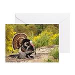 Wild Turkey Gobbler Greeting Cards (Pk of 20)