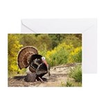 Wild Turkey Gobbler Greeting Cards (Pk of 10)
