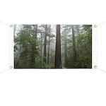 Redwood Forest Banner
