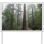 Redwood Forest Yard Sign