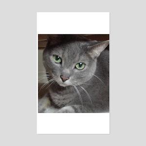 Russian Blue Cat Sticker (Rectangle)