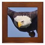 Eagle Eye II Framed Tile