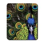 Peacock Head Mousepad