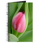 Pink Tulip Bud on Journal