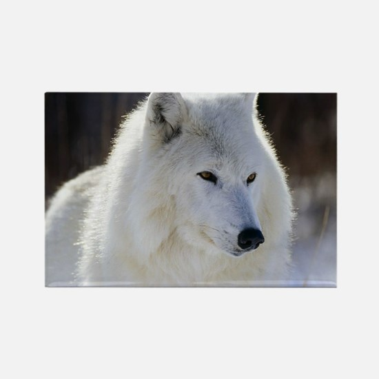 Unique White wolf Rectangle Magnet