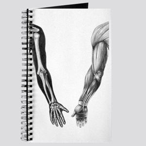 Arms - Journal