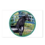 Bridge/Arabian horse (blk) Postcards (Package of 8