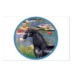 Lilies/Arabian horse (blk) Postcards (Package of 8