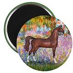 Garden/Arabian horse (brn) Magnet