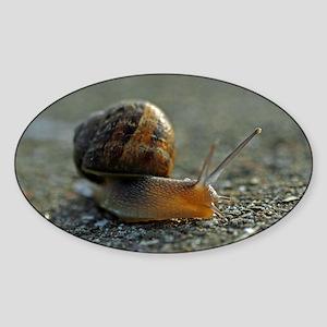 Snail 1 Oval Sticker
