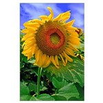 Tennessee Sunflower Poster